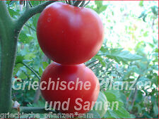 Siberian Tomate 10 frescco tomaten RUSOS frescos tomaten tolerante al frío