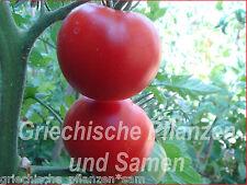 Siberian tomate 10 Frais Tomaten russe précoce Tomaten tolérant froid