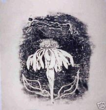 "Original Monoprint by Robert Fagg ""Echinacea"""