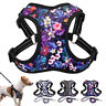 Floral Dog Walking Harness and Lead Adjustable Reflective Soft Padded Vest XS-L