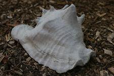 Cement Shell Garden Statue Concrete art for your Sea Scape garden
