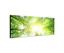 150x50cm Wald grün Panorama Morgensonne Leben Natur Leinwand  Bild Sinus Art