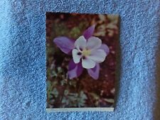 Vintage Postcard Other / Flower - Mountain Columbine 10-G-143