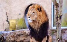 """1,0 Gramm Feingold Motiv-Karte """"Löwe"""" Goldbarren Gold 999,9 Barren Geschenkidee"""
