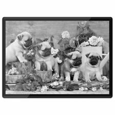 Plastic Placemat A3 BW - Pug Dog Puppies with Flowers  #36864