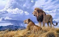 ZWPT28 100% hand-painted modern Two lions decor art  oil painting on Canvas