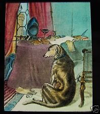 Glass Magic Lantern Slide DOG BY A TABLE C1890 VICTORIAN DOGS