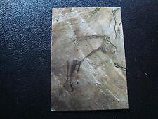 FRANCE - carte postale 1995 grotte de niaux  (cy53) french