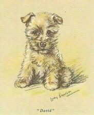 Cairn Terrier Puppy - Matted Dog Print - Lucy Dawson