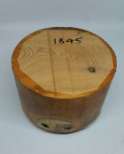 Yew woodturning bowl blank (1845) (165mm x 102mm)