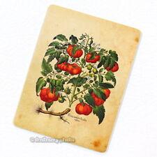 Tomatoes Deco Magnet, Decorative Fridge Antique Botanical Illustration Mini Gift