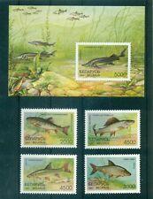 PESCI D'ACQUA DOLCE - FRESH WATER FISH BELARUS 1997 set+block