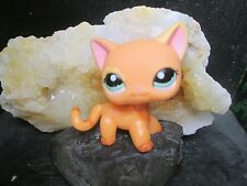 Littlest Petshop Lps Pet Shop Chat Europeen Shorthair Cat # 1643