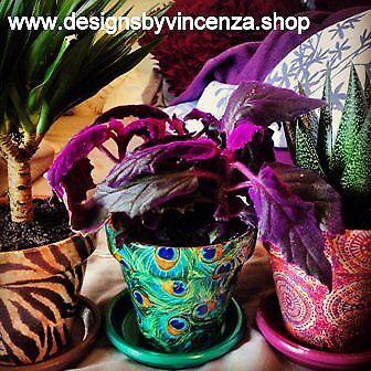 Designs by Vincenza