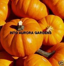 25 Sugar Pie Pumpkin Seeds Non-gmo