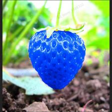 500 PEZZI Semi Blu Arrampicata Albero alla fragola PIANTE BONSAI GIARDINO RARI frutto a casa
