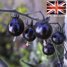 Raro Púrpura cereza Semillas De Tomate - 10 Fresco Viables - vendedor GB