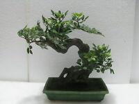 BONSAI  Artificiale  Ficus Benjamin  vaso rettangolare in ceramica  33x33x14