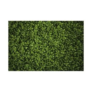 Green Grass Lawn Backdrop Decor Photographic Background 5x3ft