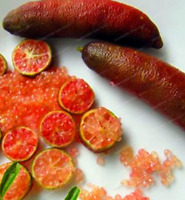 20 Pcs Seeds Finger Limes Citrus Pomegranate Bonsai Fruit Garden Mix Colors NEW