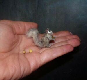 Squirrel & 3 nuts OOAK miniature 1:12 dollhouse miniature handmade handsculpted