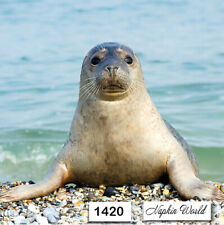 (1420) Two Individual Paper Luncheon Decoupage Napkin - Seal Sea Ocean Mammal