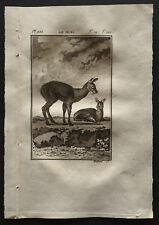 1799 - Buffon - Le musc - Gravure zoologie