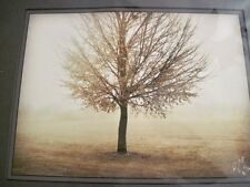 Fine Art Photograph Signed TREE IN GLOWING FOG 12 x 16