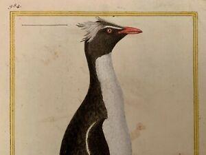 gravure buffon Martinet manchot penguin print