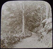 Glass Magic Lantern Slide ST GEORGES HILLS C1890  PHOTO WEYBRIDGE SURREY TREES