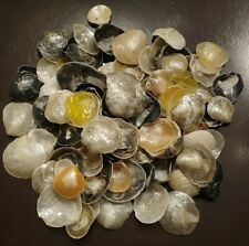 100 Beautiful Jingles Seashells Various Sizes & Colors Cocoa Beach Florida