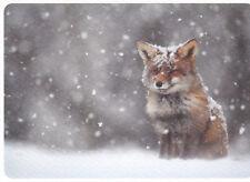 Ansichtskarte: kleiner Fuchs im Schneegestöber - little fox in snow and ice