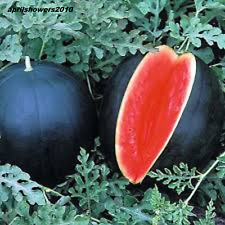 Watermelon Blacktail Mountain EARLIEST BEST TASTING MELON  COMBINED SHIP SEEDS