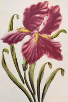 C1911 Pretty Embossed Purple Iris Portrait Postcard Gold Accent Greeting