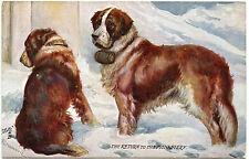 CHIENS . DOGS.  SAINT BERNARD. SAUVETAGE EN MONTAGNE. MOUNTAIN RESCUE. DRUMMOND.