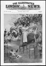 1899 antica STAMPA-FRANCIA Cimiez fiori Queen Lady Sedia lilla iris (433)