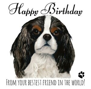 PERSONALISED BIRTHDAY CARD FROM THE DOG-CAVALIER  KING CHARLES SPANIEL PET LOVER