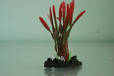 Aquarium Plant Tropical Corkscrew Plant Red & Green 13cms High For All Aquariums