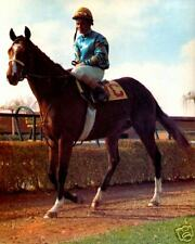 Northern Dancer -  8x10 Color Photo
