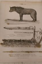 North Pole: Dog from the Arctic Highlands: Encyclopaedia Londinensis V.17