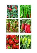 Chilli Pepper Seeds - Italian Mix
