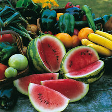 Vegetable Seeds - Watermelon - Sugar Baby - 100 Seeds