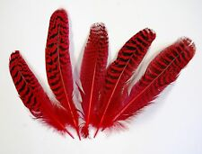 "5 Pcs PEACOCK QUILLS 6""-10"" Dyed RED Feathers; Costume/Dress/Bridal/Halloween"