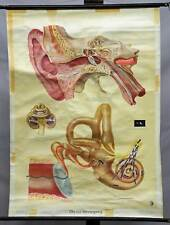 school pull-down wall chart ear organ hearing process vintage medical poster