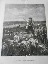 Gravure 1888 - Le grand troupeau au paturage d'après Ch. Jacque