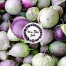 Tomatillo Purple 20 Samen Physalis alte historische Sorte frische Ernte 2018!