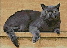 """Gris Persa Gato puntada cruzada contada Kit de 12 """"x 8,75"""" 30,7 cm X 22,3 cm"""
