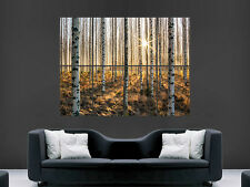 FOREST NATURE POSTER SUN THROUGH THE TREES  GIANT WALL PICTURE PRINT LARGE HUGE
