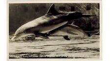 1960's real photo postcard- Mother and Baby Porpoise-Marineland, Florida