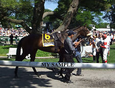 STEPHANIE'S KITTEN 8 by 10 PHOTO 2014 Horse Race BELMONT PARK Breeders Cup #9